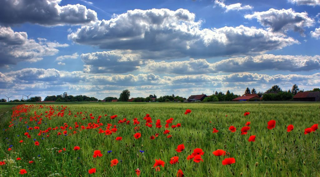 field-of-poppies-50588_1280